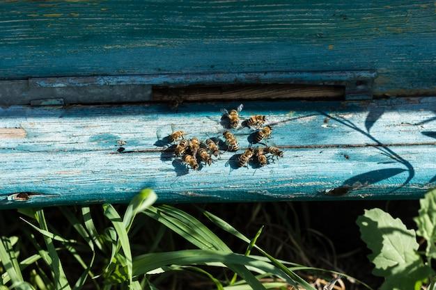 Close-up pszczoły na zewnątrz ula w gospodarstwie