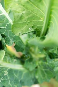 Close-up pyszne zielone liście sałaty
