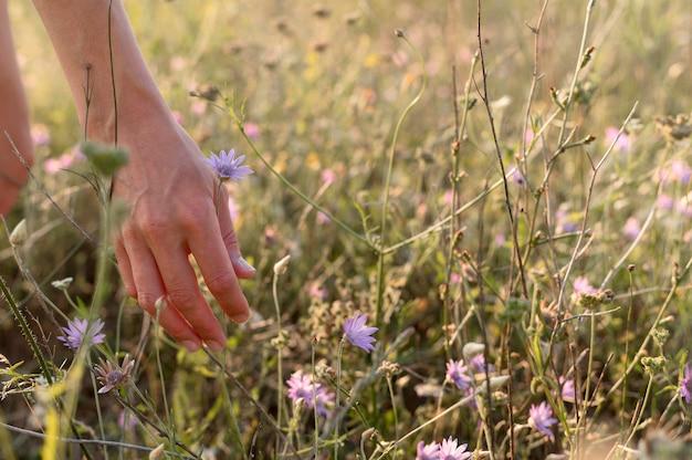 Close-up ręcznie zbierając kwiat