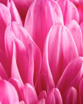 Close-up różowe płatki makro natura