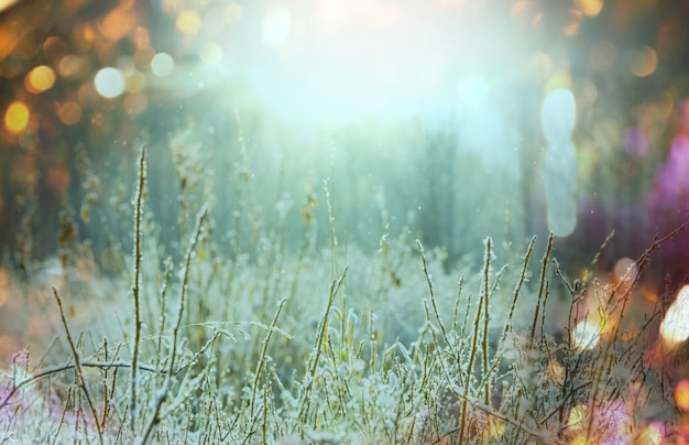 Close-up strzał z mrożonej trawy w zimowy poranek w górach.
