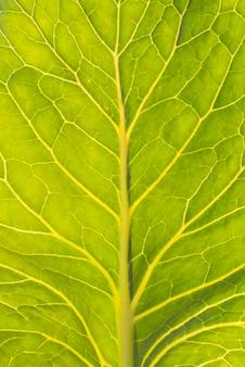 Close-up świeży liść sałaty