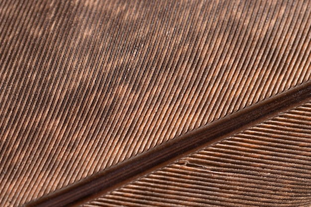 Close-up teksturowane organiczne tło
