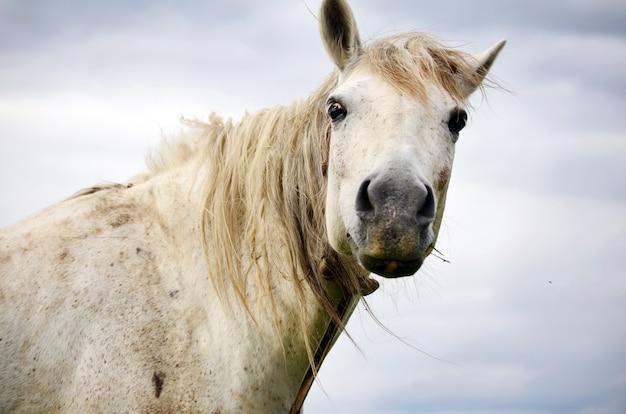 Close-up z białym koniu