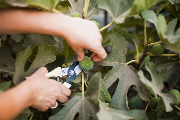 Close-up z cięcia ręcznego przycinania strzyżenia z drzewa