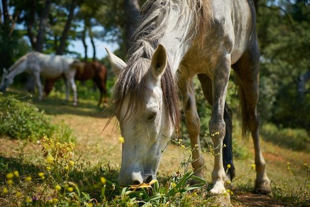 Close-up z karmienia koni