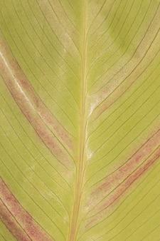 Close-up z naturalnych liści łodygi roślin z teksturą