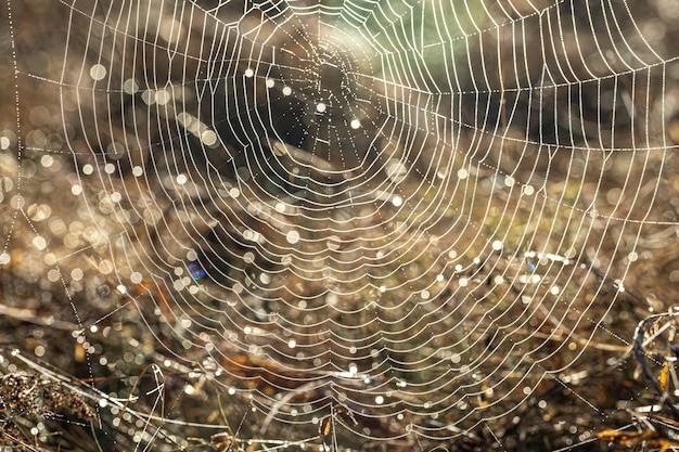 Close-up z pajęczej sieci w kroplach rosy na polu wczesnym, słonecznym rankiem.