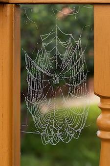 Close-up z pajęczej sieci z kroplami deszczu na zielonym tle. pajęczyna lub pajęczyna naturalny deszcz tło wzór z bliska. naszyjnik z pajęczyny