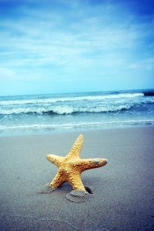 Close-up z rozgwiazda z morza tła