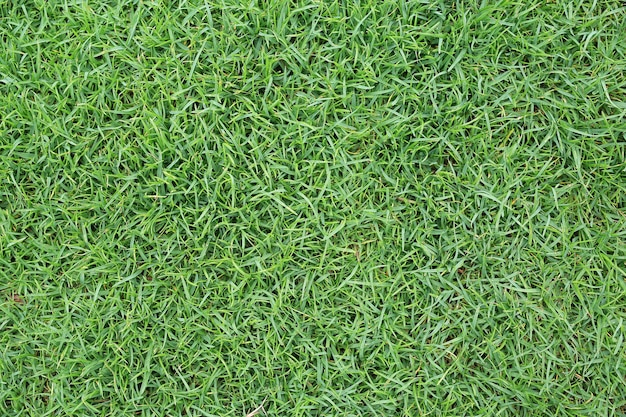 Close-up zielona trawa tekstura jako tło
