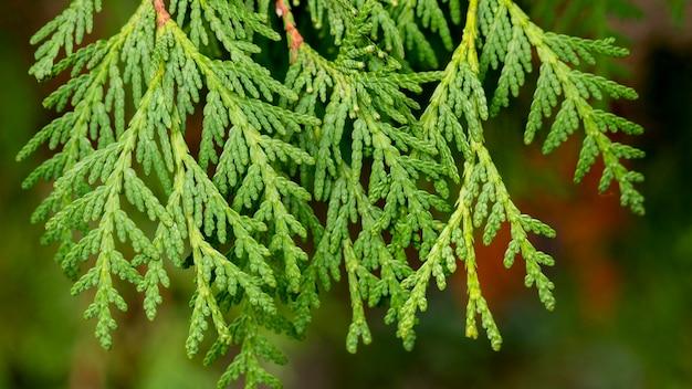 Close-up zielone gałęzie drzew