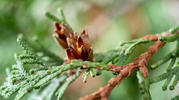 Close-up zielone i brązowe drzewo gałąź