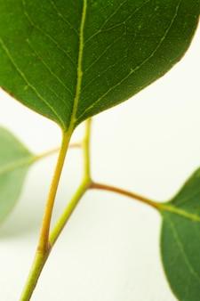 Close-up zielony liść