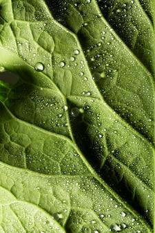 Close-up zielonych liści nerwów z kroplami wody