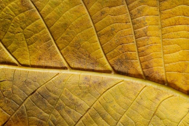 Close-up żółte nerwy liści