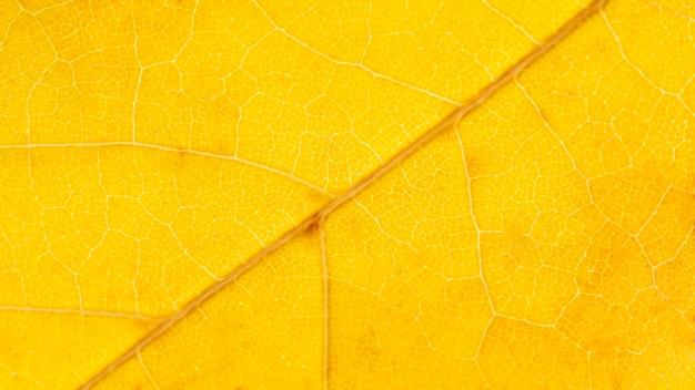 Close-up żółty liść