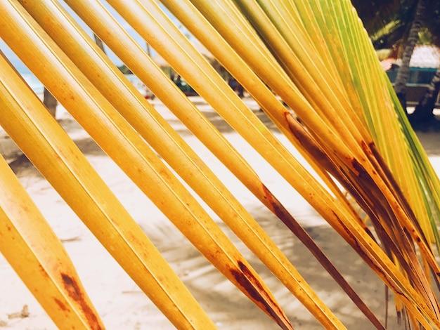 Close-up żółtych liści palmowych