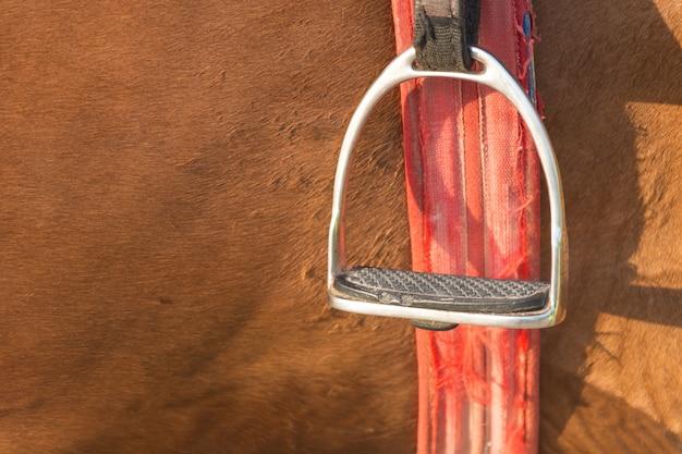Closeup stallion stopa gospodarstwa w pobliżu