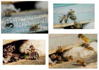 Collage pszczół