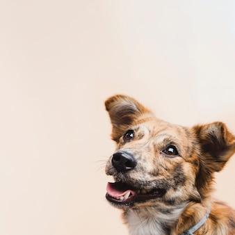 Copy-space ładny pies patrząc na kamery
