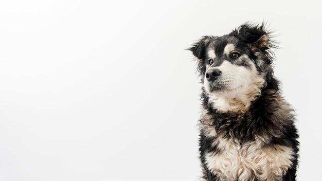 Copy-space śliczny pies domowy