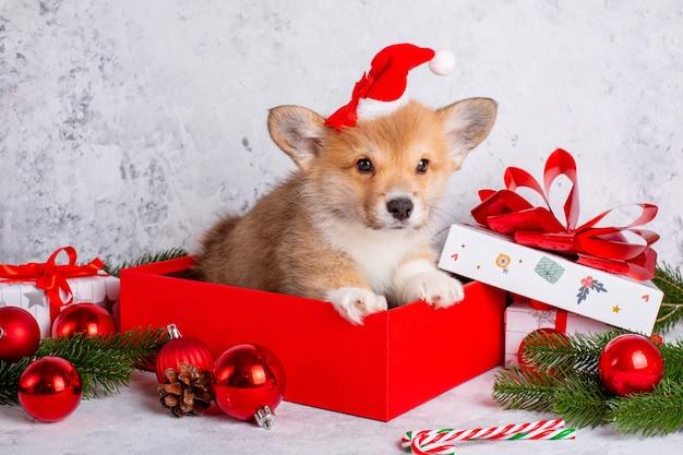 Corgi szczeniak w czapce świętego mikołaja na tle bożego narodzenia z prezentami