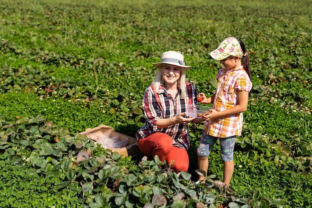 Córka i mama pracuje w ogrodzie warzywnym, zbiera truskawki