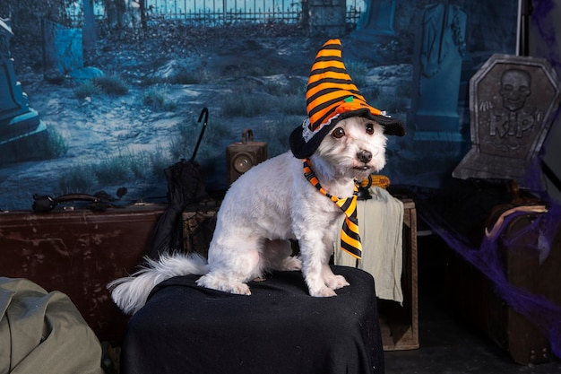 Coton de tulear w nocnej scenie halloween z kapeluszem