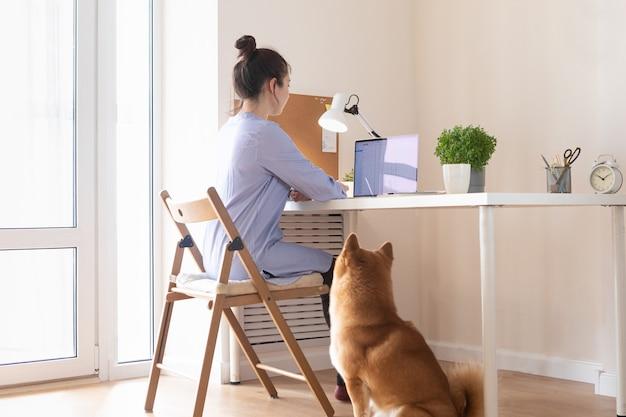Covid-19 pracuje z koncepcji domu. kobieta korzystająca z laptopa, pies shiba inu śpi obok niej