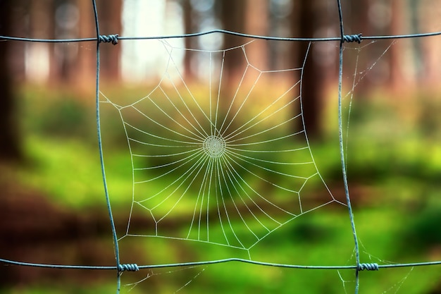 Coweb i ogrodzenie