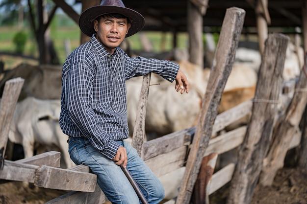 Cowman w oborze i jego krowy