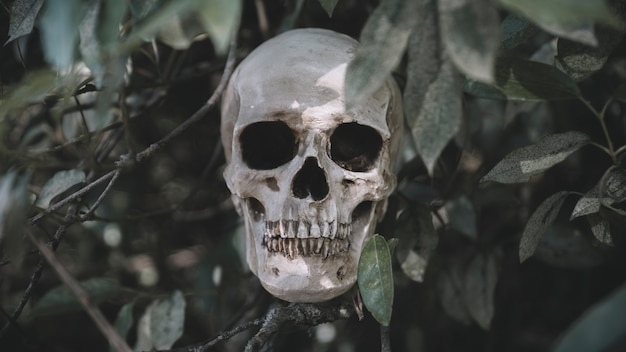 Cranium umieszczone na gałęziach