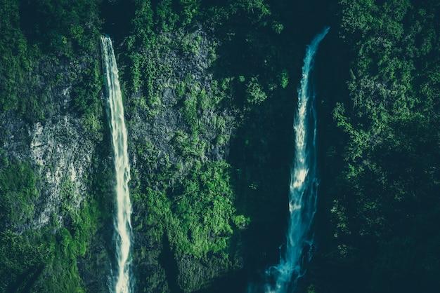 Creek w lesie deszczowym