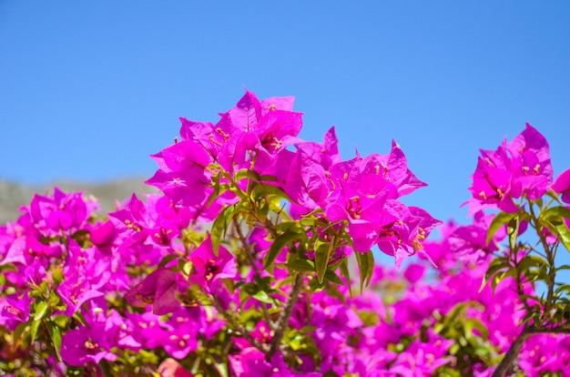 Cudowne kwiaty znalezione w grecji na wyspie