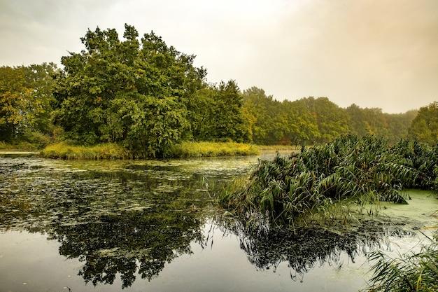 Cudowne spokojne jezioro otoczone drzewami i roślinami