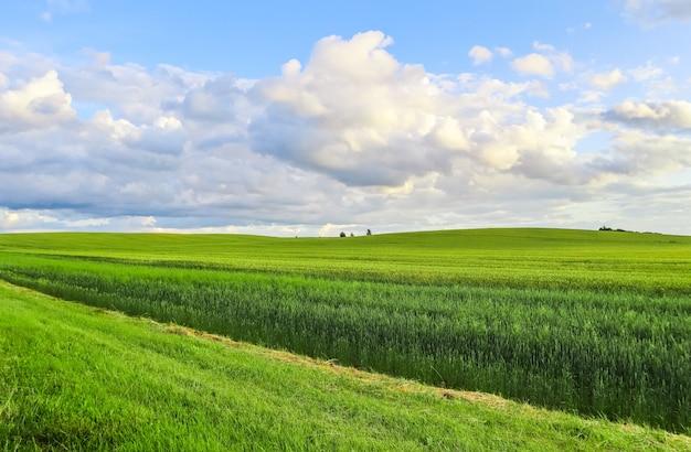 Cudowne zielone pola wzgórza, drzewa i błękitne niebo z chmurami w wiosennym krajobrazie wsi