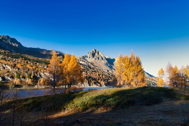 Cudowny jesienny krajobraz w dolinie engadyny w pobliżu sankt moritz. alpy szwajcarskie
