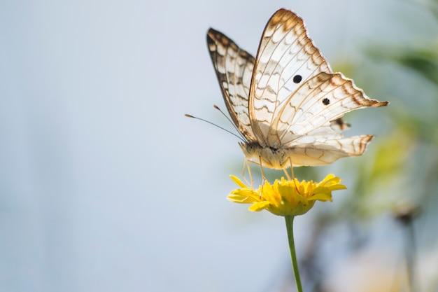 Cudowny motyl na dandelion