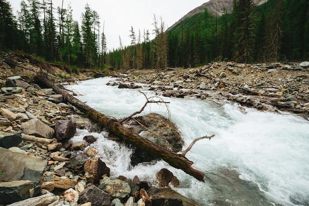 Cudowny szybki strumień wody z lodowca w dzikiej górskiej zatoczce z kamieniami. niesamowity krajobraz z potokiem, bogatą roślinnością, lasem i górami