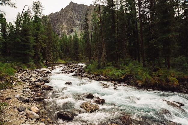 Cudowny szybki strumień wody z lodowca w dzikiej górskiej zatoczce z kamieniami
