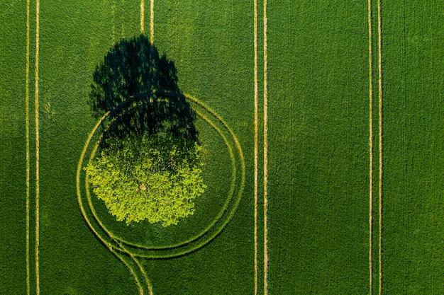 Cudowny widok z góry na samotne drzewo na zielonym polu, doskonałe popołudniowe światło, cienie i kolory
