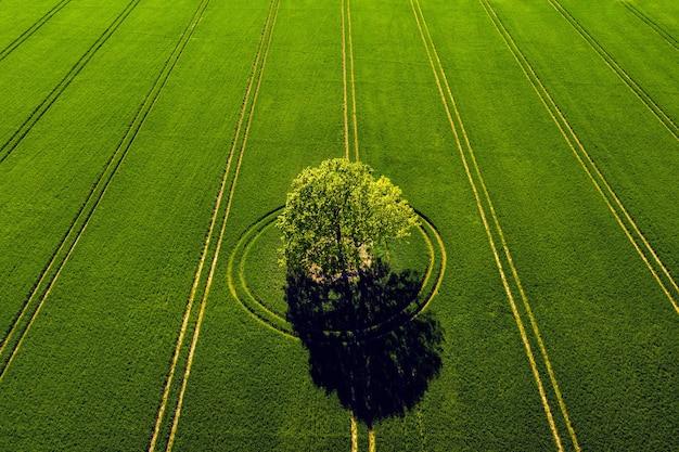 Cudowny widok z góry na samotne drzewo na zielonym polu