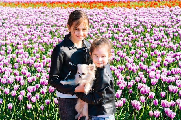 Cute nastolatek dziewczyna z długimi włosami zapachu kwiatu tulipana na polach tulipanów w regionie amsterdamu