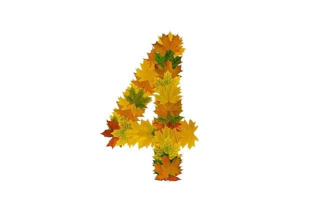 Cyfra 4 z jesiennych liści klonu na białym tle. alfabet z liści zielonych, żółtych i pomarańczowych.