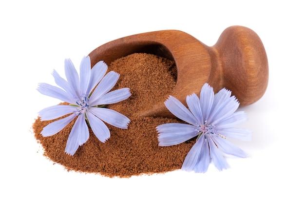 Cykoria w proszku i kwiat w drewnianej łyżce na białym tle cichorium intybus
