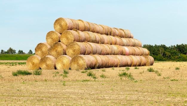 Cylindryczny stos słomy w kształcie piramidy, letni krajobraz z odpadami po zbiorze pszenicy