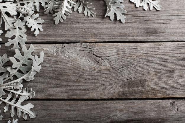 Cyneraria liście na drewnianym tle