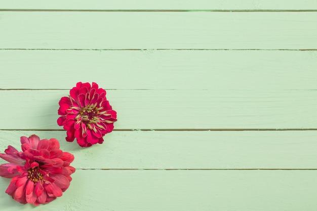 Cynie kwitną na zielonym drewnianym tle