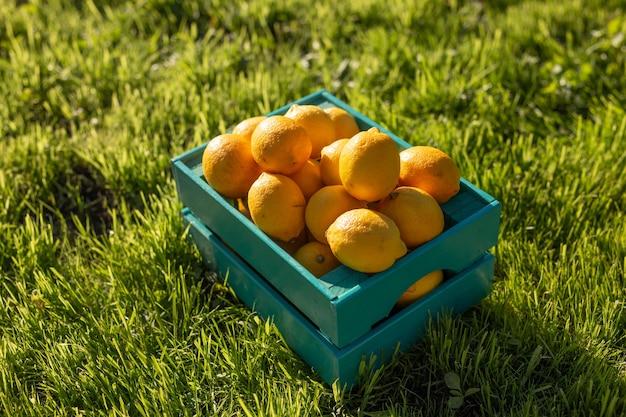 Cytryny leżą w niebieskim drewnianym pudełku na zielonej trawie oświetlonej światłem słonecznym.
